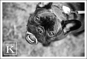 Dog-photos-365-web